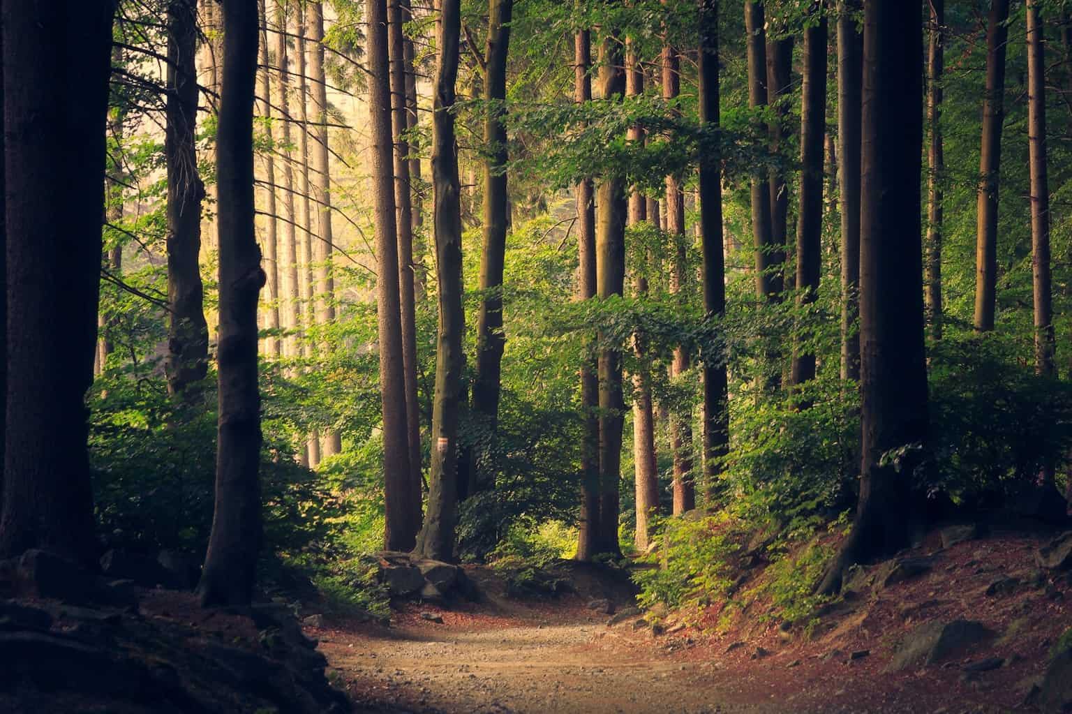 Does reforestation work? The reforestation impact is undeniable. But are there reforestation projects in the US? Countries like China, Brazil and Pakistan seem to have recognized the needs of reforestation. Has the rest of the world?