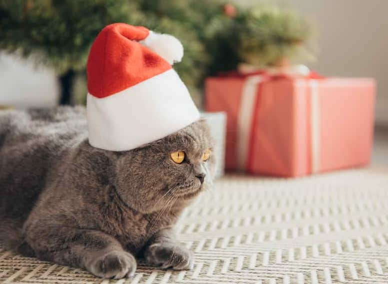 cat wearing Christmas hat with eco-friendly gift