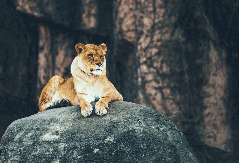 Do wild animals have any rights under the law in the U.S.