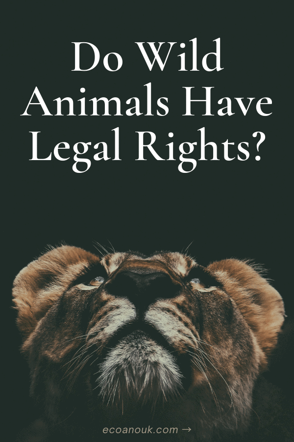 Do wild animals have any rights under the law in the U.S. (or other countries) the way human citizens do?