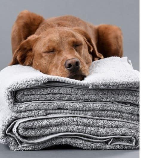 100% organic cotton towels