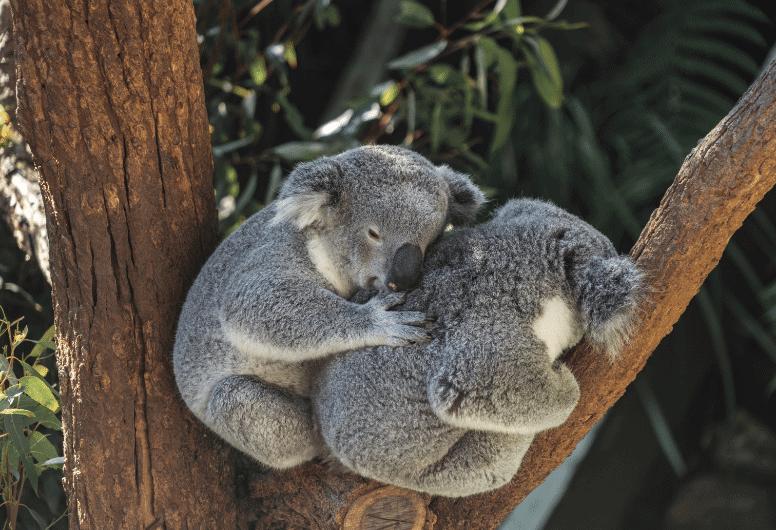 wild animals legal rights