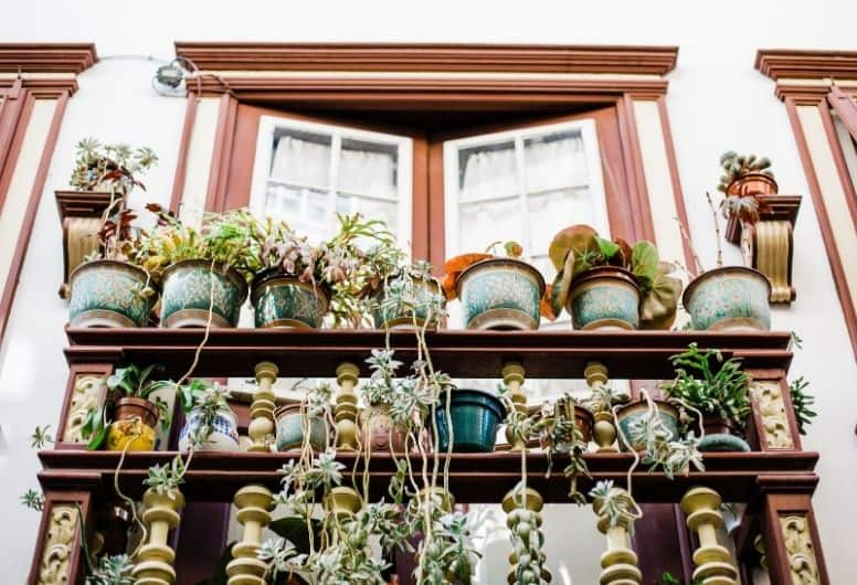 balcony with lots of pots that have been tended to