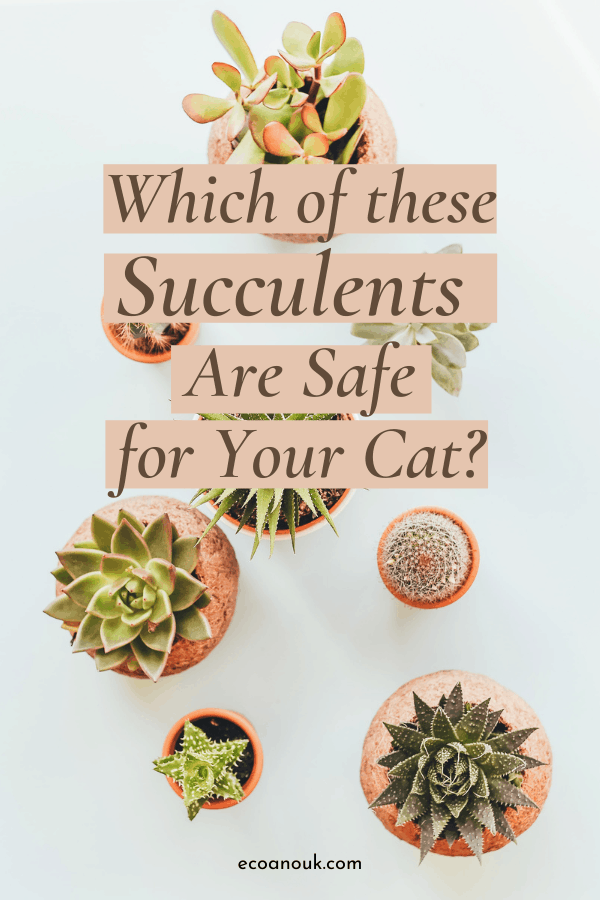 8 succulents that are safe for cats