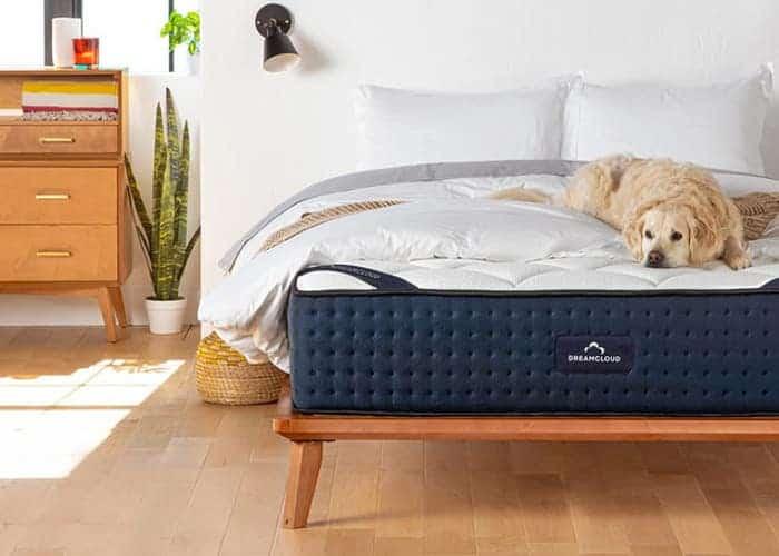 A Golden Retriever dog lying on a DreamCloud mattress