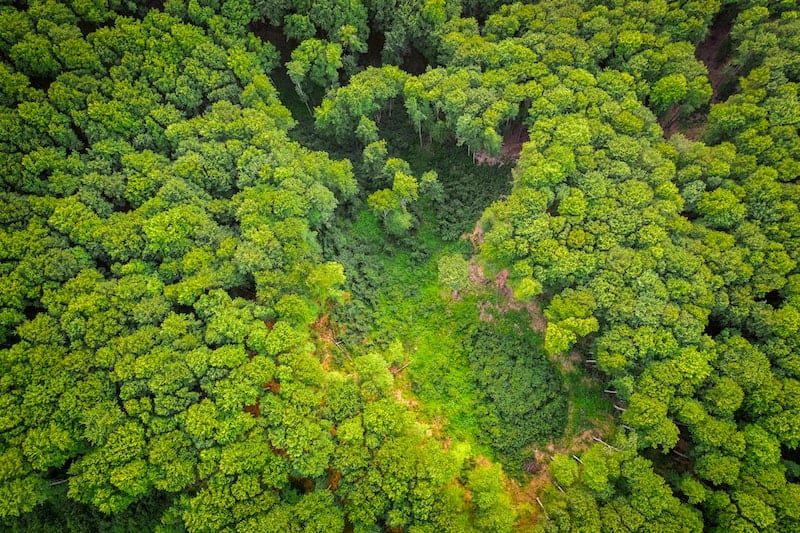 view of a forest from a drone - field of dreams restoration theory