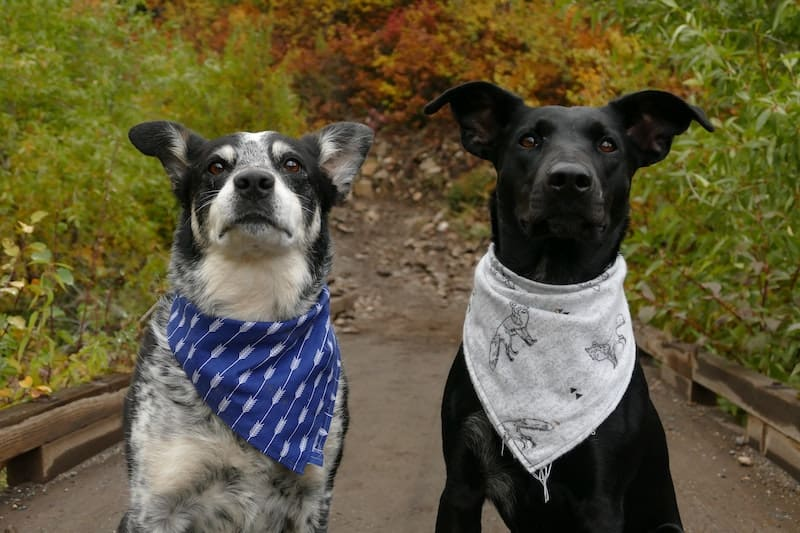 two cute dogs looking at the camera. multiple pet insurance
