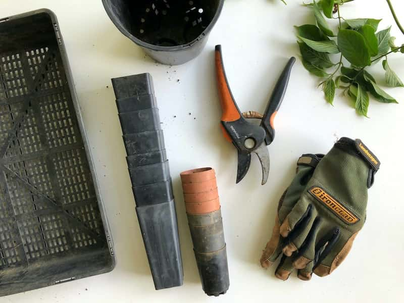 maintenance and care with gardening tools