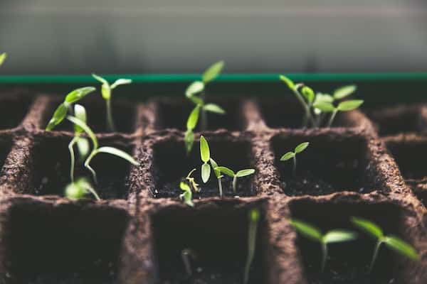 Is June Too Late to Plant a Garden?