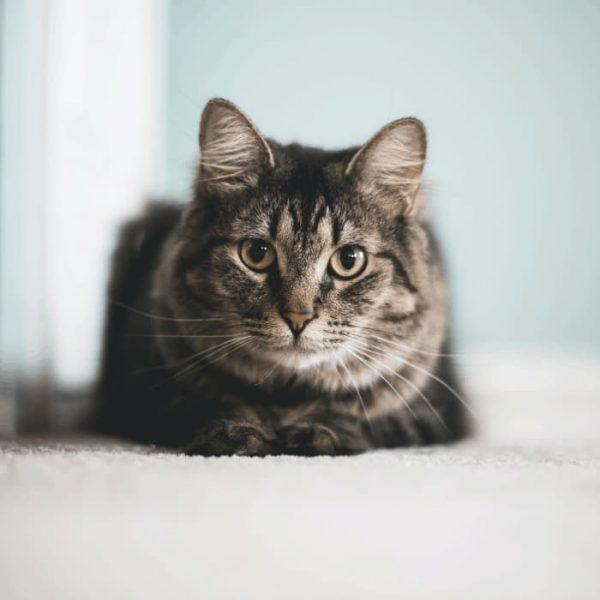 eco friendly cat litter