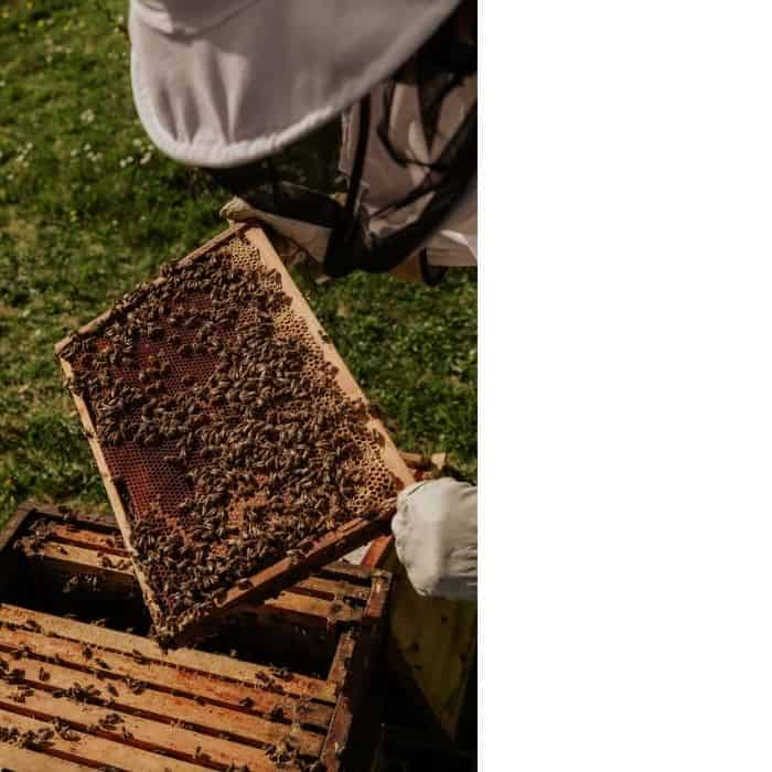 how can I help save the bees? apiary