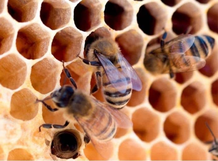 how can we save the bees?