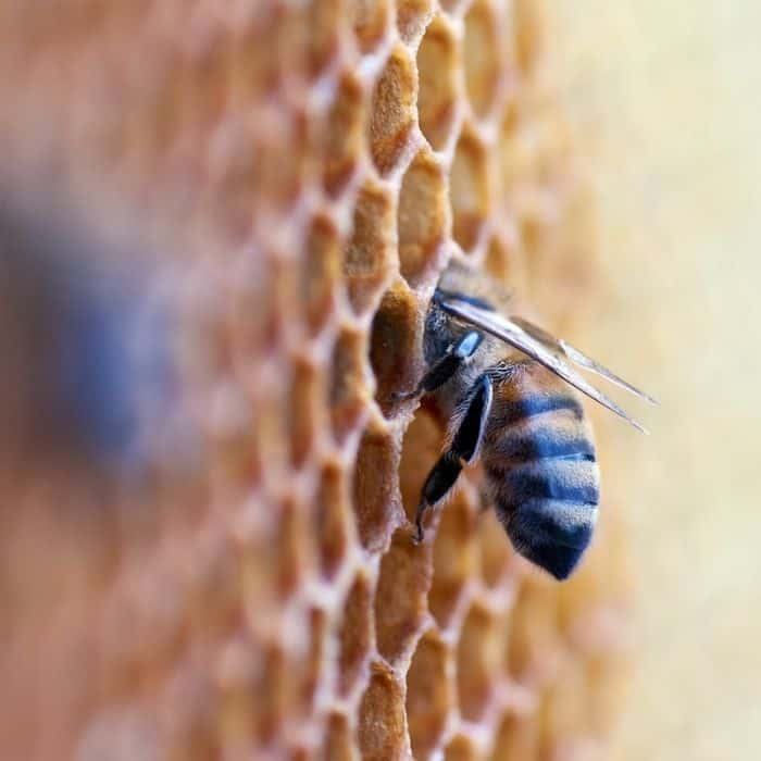 Why are Bees Important To Humans?