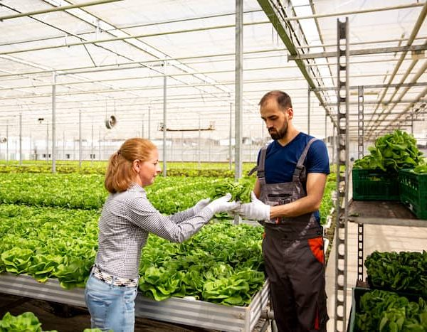 How Does Community Supported Agriculture Work?